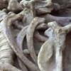 Tour Paleontológico